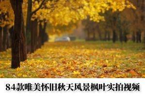 84款唯美怀旧秋天风景枫叶实拍视频